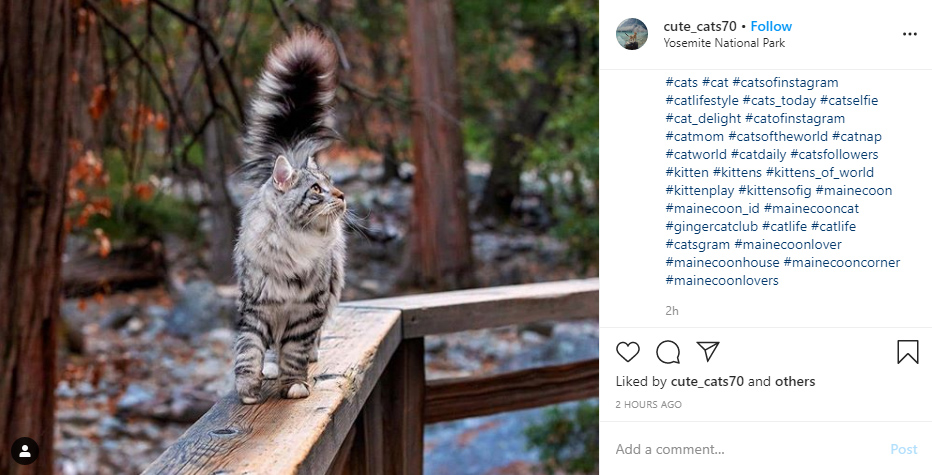 instagram hashtags for pets ideas examples