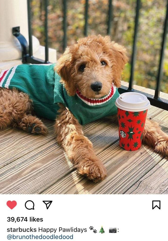 dog instagram user generated content example